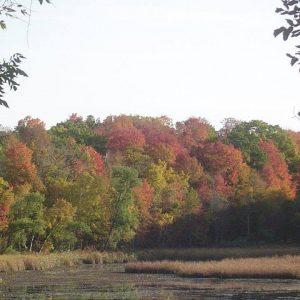 Wetlands & Wooded Areas