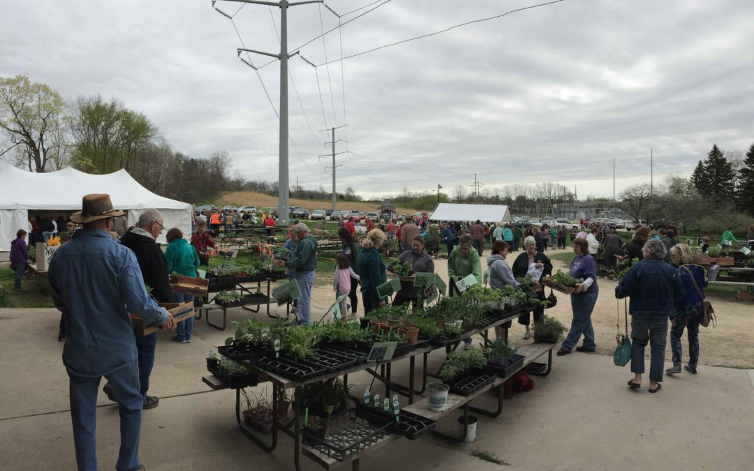 32nd Annual Wildflower Sale