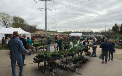 Countdown to the Flower Sale