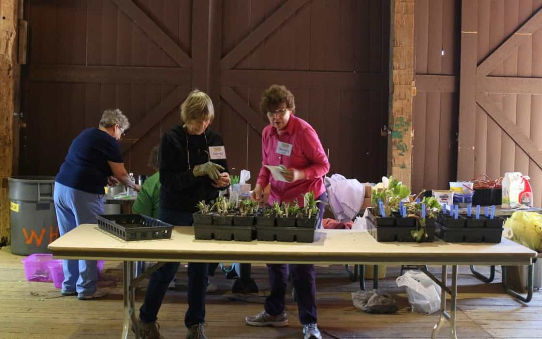 Work on the Annual Plant Sale is Underway