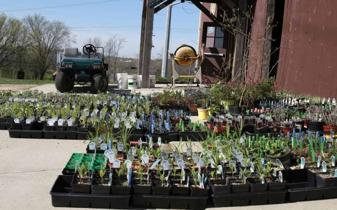 Wildflower and Perennial Sale is Saturday May 11
