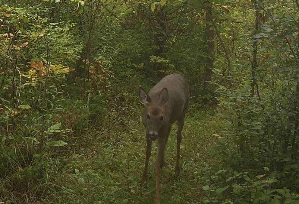 President's Message – Deer Management