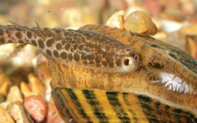 2/19/19 SFE – Unionid Mussels