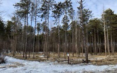 President's Message – LLC Pine Plantation