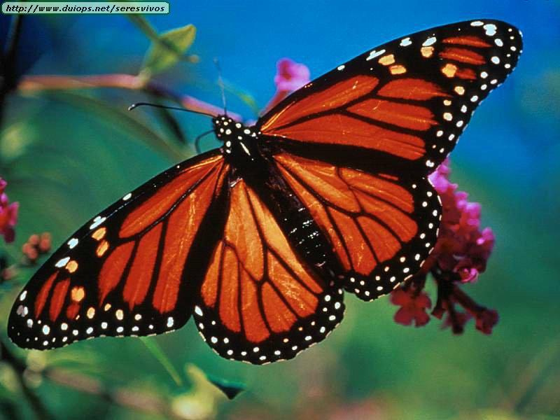 Flitter Flutter Butterflies