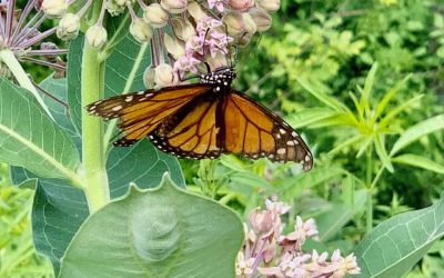 "President's Message – ""Milkweed Garden"" Visitors"