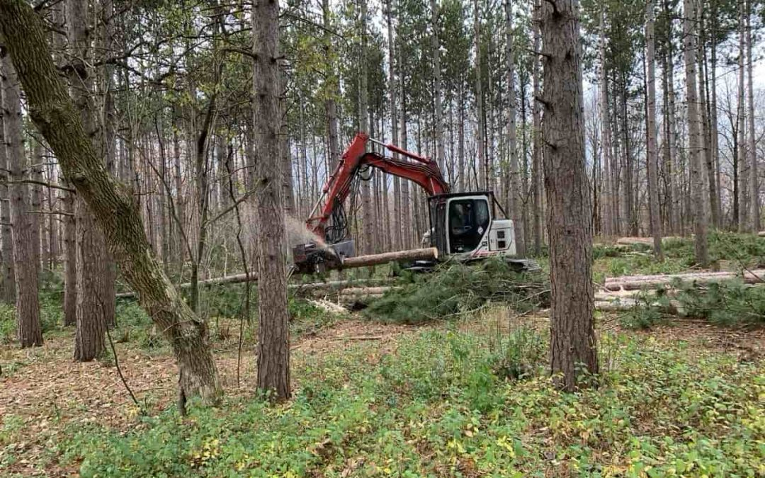 President's Message – Logging in the Pine Plantation