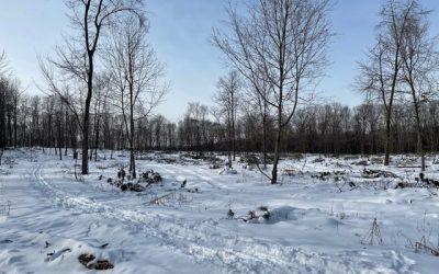 President's Message – Pine Plantation Logging Progress