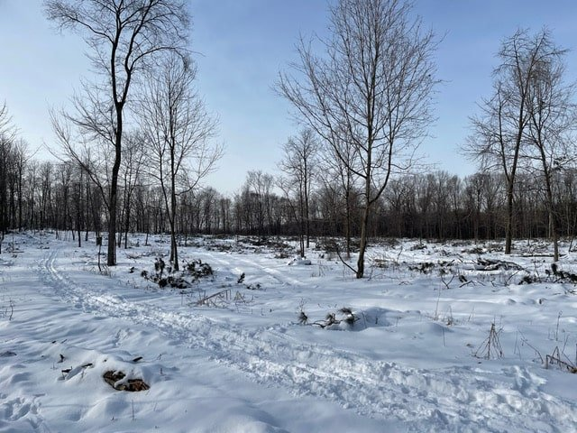 President's Message – Pine Plantation Logging Progress